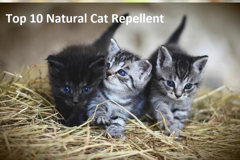 natural cat repellent